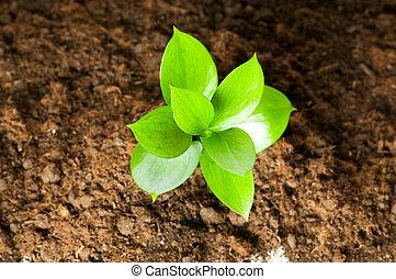 nieuw leven, concept, -, groene, kiemplant, groeiende, uit,...
