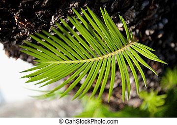 nieuw leven, groen plant