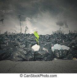 nieuw leven, vervuiling