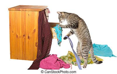 nieuwsgierig, kat, rummaging, in, een, lade