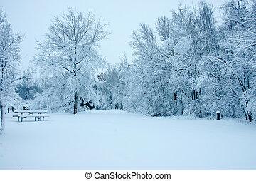 nieve, árboles, cargado