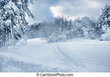 nieve, árboles