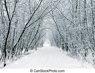 nieve, bosque, callejón