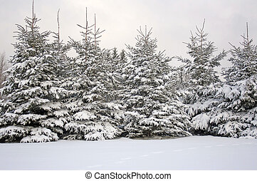 nieve fresca