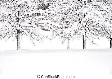 nieve, y, árboles