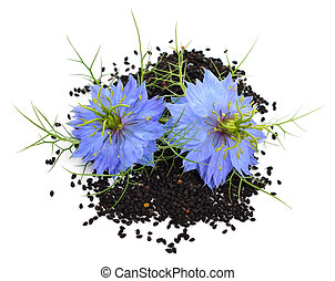 Nigella sativa or fennel flower, nutmeg flower, black caraway, Roman coriander, black cumin, black sesame, blackseed, black caraway, Bunium persicum. Isolated.
