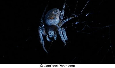huge spider chews the jaws - night, a huge spider chews the...