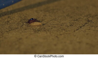 Night Bug Eating - A night bug is eating a junk food on the...