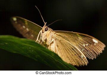 night butterfly portrait