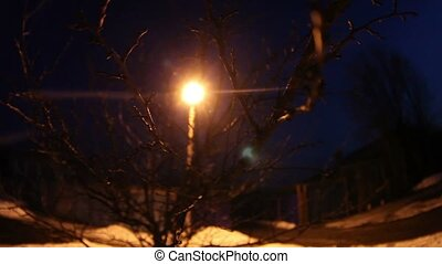 night dry tree branch Backlit yellow light from the...