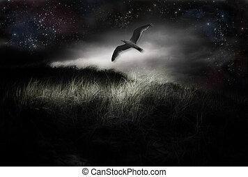 Night Flight - Bird in flight under stars
