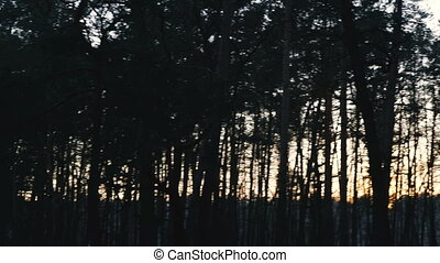 Night. Forest at dusk