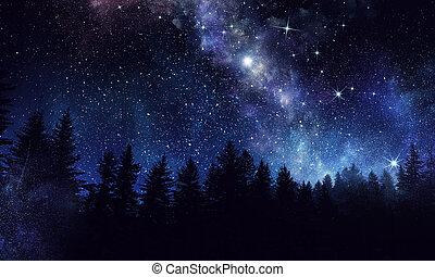 Night forest scene