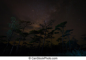 Night forest scene