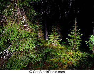 Night forest - Summer night in a pinewood