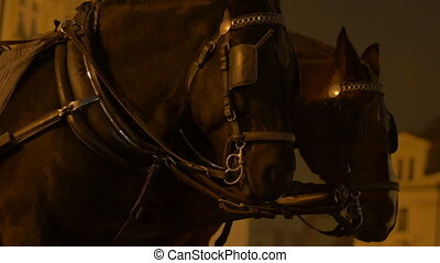Night Horses on Coach - Standing night horses waitong on a...