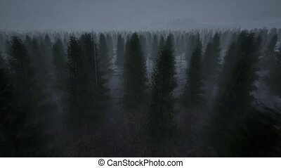 Night landscape forest fog rain