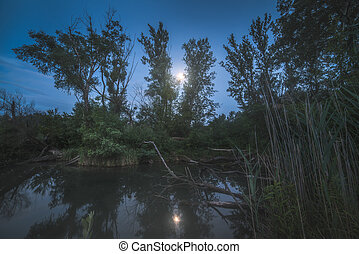 Night Landscape. Stump By the Marsh. - Night Landscape with...