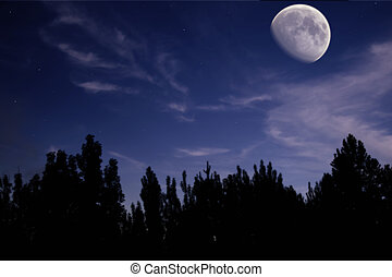 night landscape with the moon, trees silhouette