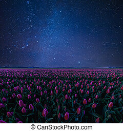 Night Landscape with Tulips and Stars