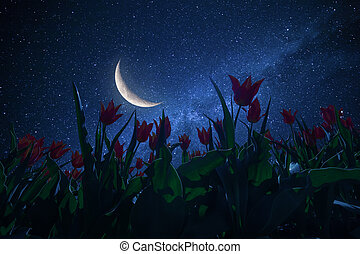 Night landscape with tulips meadow