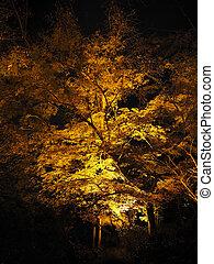 Night light up in autumn at Kiyomizu-dera temple, Japan.