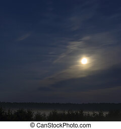 Night moon over forest