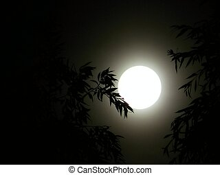 night of the full moon on a background