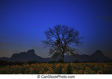 night photgraphy of sunflowers field and dry tree branch...