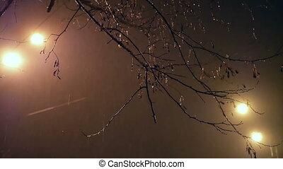 Night rain branch light