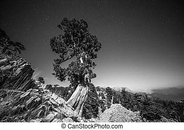 night sky behind of tree