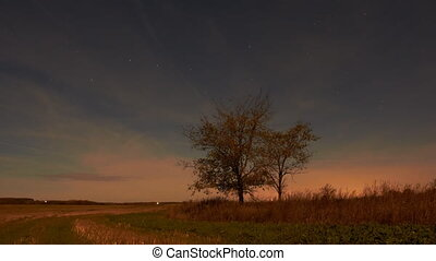 Night sky of stars time-lapse trees