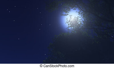 night stars 10
