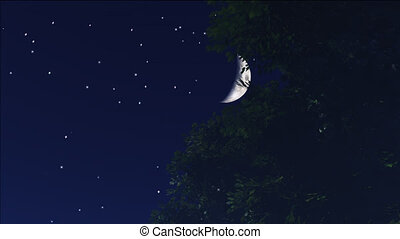 night stars 11