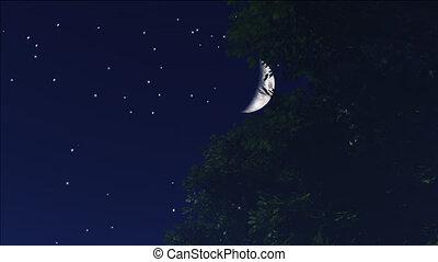 night stars 11 - stars twinkle in the night sky