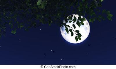 night stars 13