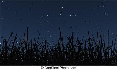 night stars 15