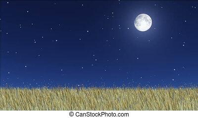 night stars 26