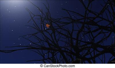 night stars 9