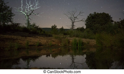 Night Time Lapse of stars and illuminated Dead Chestnut tree
