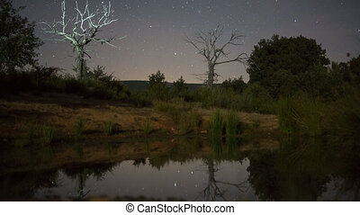 Night Time Lapse of stars and illuminated Dead Chestnut tree