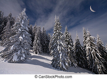 night view of snow-covered fir trees with stars and moon in...