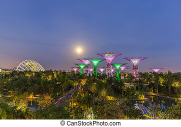 Night view of the supertree grove and cloud forest dome