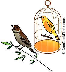 Nightingale and canary - Vector images of birds -...