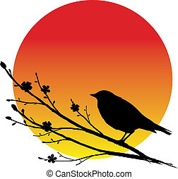Nightingale - A silhouette of nightingale on a blooming...