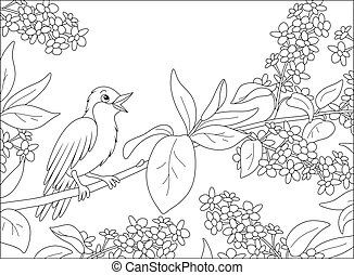 Twittering small thrush perched on a spring blooming tree, black and white vector cartoon illustration for a coloring book page