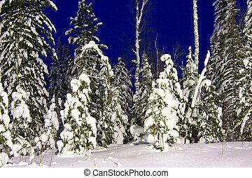 nightly, snow-bound, landschaftsbild, tannen