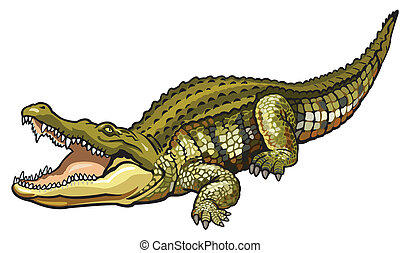 nile crocodile,crocodylus niloticus,illustration isolated on...