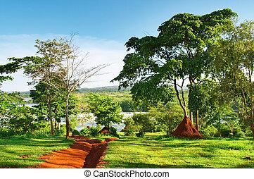 Nile River - African landscape, Nile River, Uganda