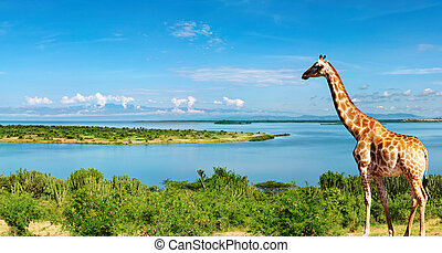 Nile river, Uganda - African landscape with Nile River and...